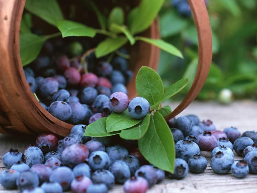 Καύση λίπους με Μύρτιλλο – Blueberry
