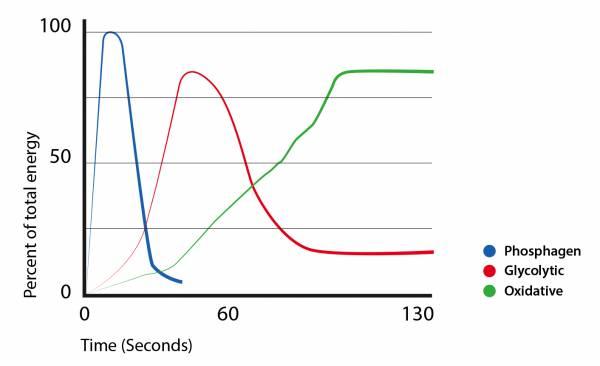 grafima 1