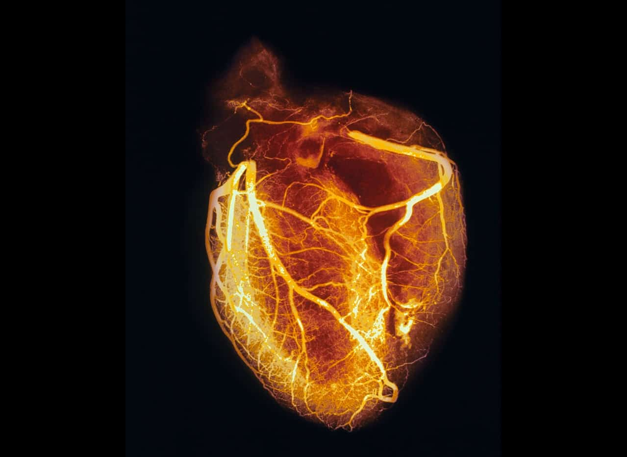 human-heart-pictures-hd-