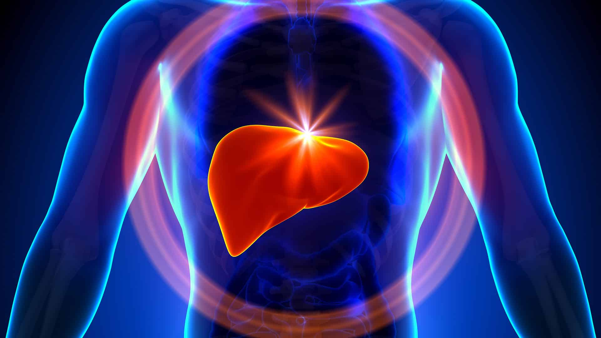 sikoti organ liver