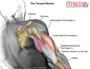 TORCH-YOUR-TRICEPS-INS2