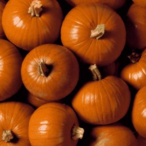 comp-249993-pumpkin-artville
