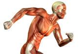 Μυικές ίνες και ο ρόλος τους στο τρέξιμο