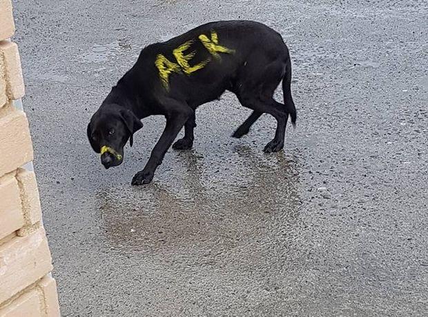 Η ΑΕΚ πήρε θέση για την κακοποίηση του σκύλου